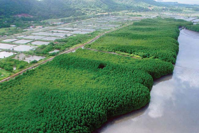 khung-kraben-mangrove-forest-learning-tourism.jpg
